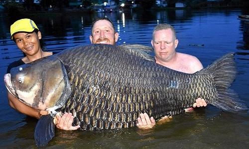 Giá cá hô 10kg