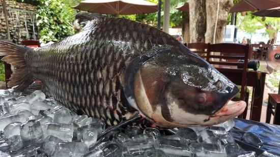 Địa chỉ mua cá hô