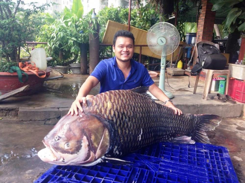 giá cá hô sống